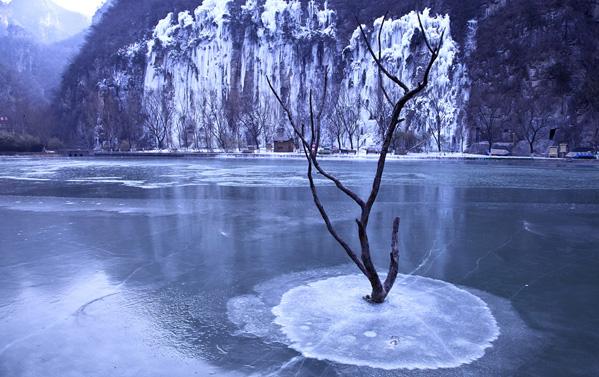 《冬韵美景恰似柳》作者:陈素梅