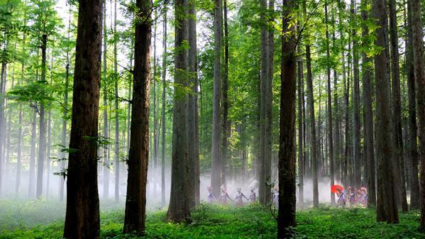 踏春(排牙山森林公园)