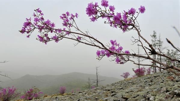 阿尔山--春天图片---郭柏林