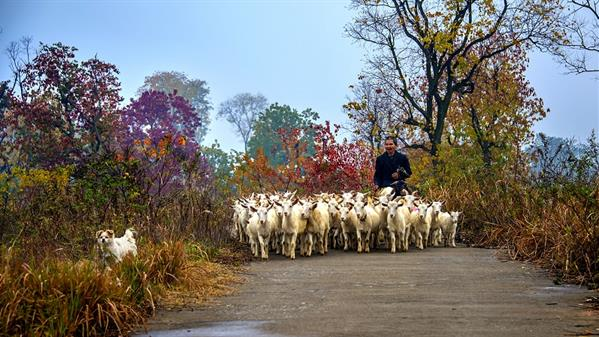 秋色伴我去牧羊  刘学伟摄