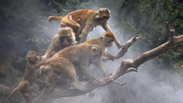 金猴探海-李仁合