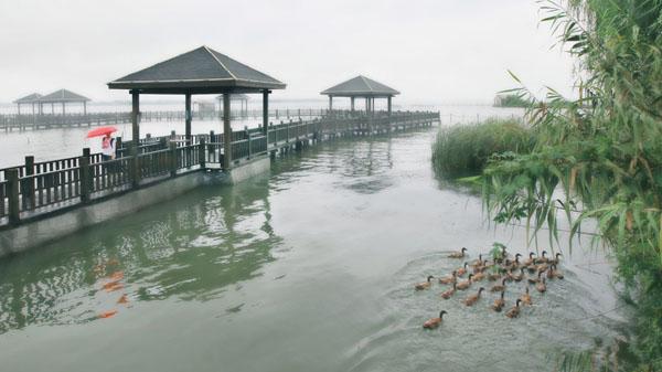 《太平阳澄西湖葫芦岛风光》谈晓华 摄