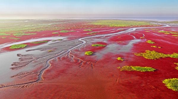 《新生湿地》丁洪安 摄