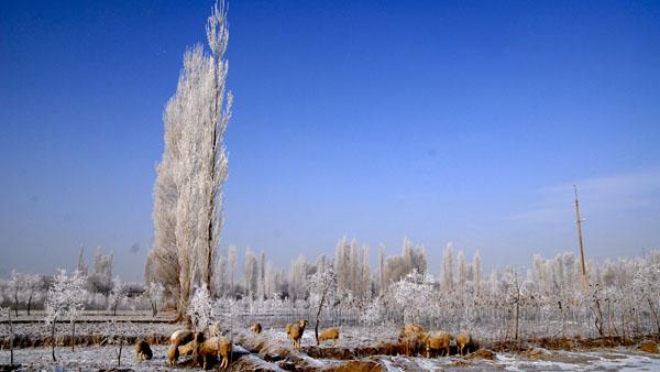 冬季 杜万田 摄