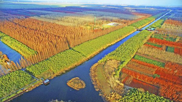 黄海国家森林公园 盐阜大众报供图