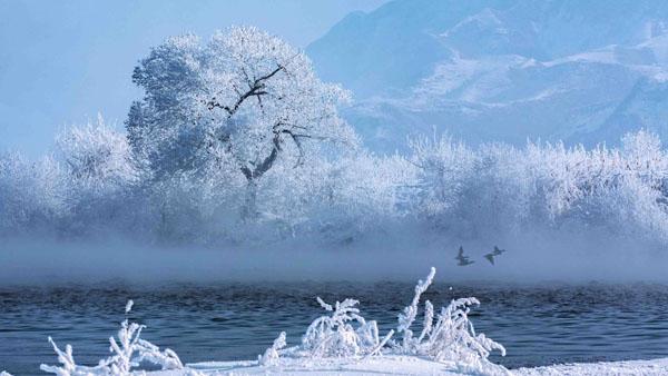 江畔雾凇 任延平 摄