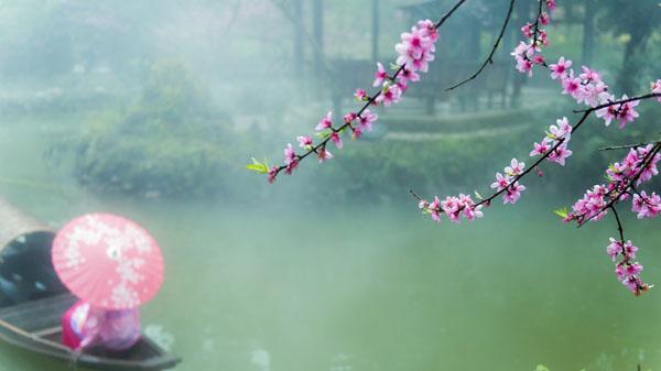 一枝花枝惹春来 胡波 摄