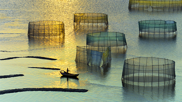 Dream-Thierry Bornier 摄