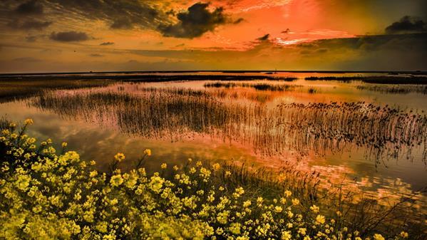 东滩湿地 陆一 摄