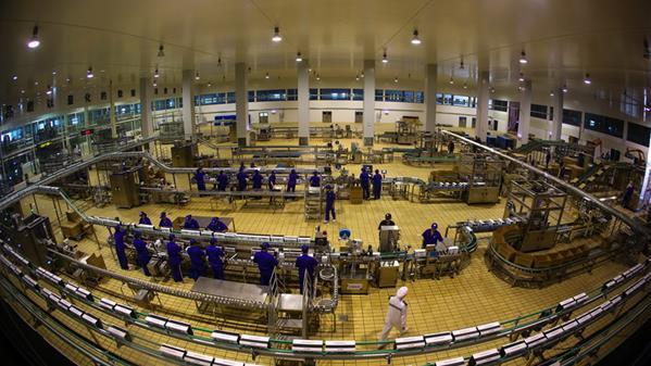 日产600吨牛奶加工厂 李向前 摄
