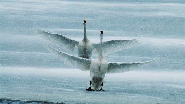 冰上芭蕾 马世民 摄