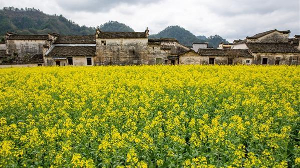《春到黟县》组照之一 顾强 摄