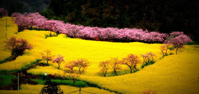 """2日(二月初二)在九龙瀑布群风景区举行布依族""""二月二""""三省区县对歌会"""