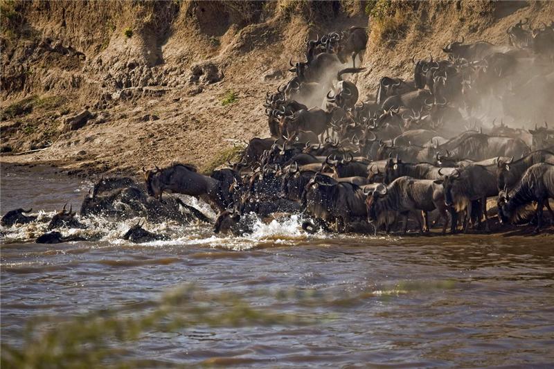 [龙摄天下]2014肯尼亚动物大迁徙摄影团—中国摄影报