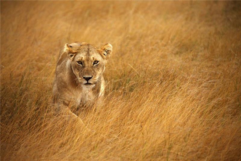 [龙摄天下]2014肯尼亚动物大迁徙摄影团