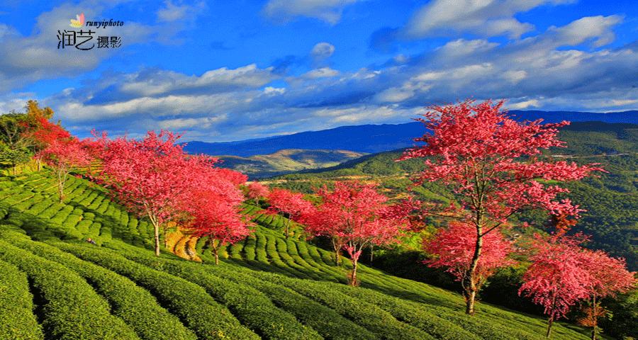 【润艺摄影】金秋怒江大峡谷、独龙江、丙中洛、双廊、大理无量山樱花摄影团