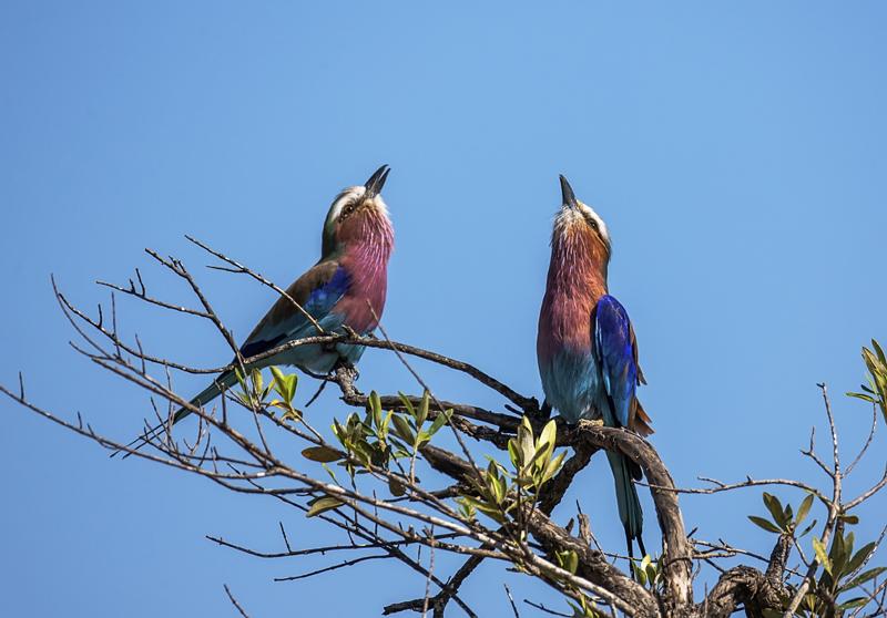 【行行摄色】肯尼亚摄影团—14天12晚,专注拍鸟