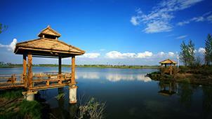 北方滨水生态区——黑龙江省哈尔滨市金河湾湿地植物园