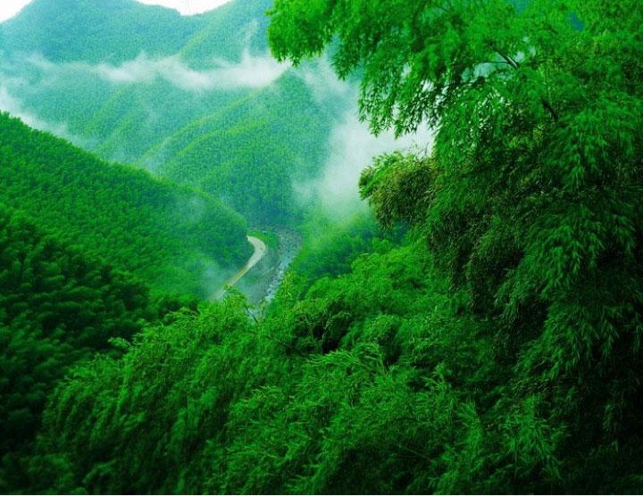 安徽省黟县木坑竹海