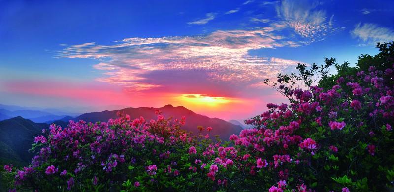 高山杜鹃 千亩草垫——安徽省黟县五溪山大峡谷