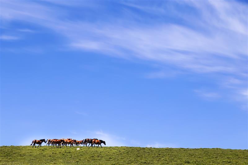 山西省忻州市马仑草原景区