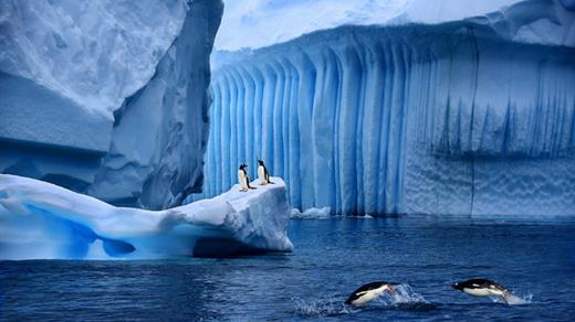 [麦田左岸]中国摄影活动在线独家包船南极王企鹅群摄影巡游之旅