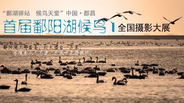 鄱阳湖候鸟全国摄影大展