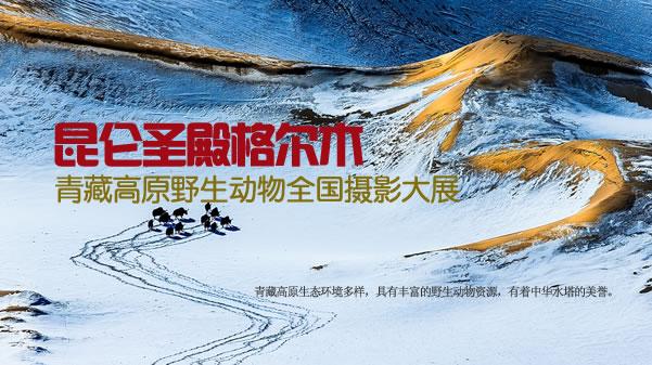 青藏高原野生动物摄影大展