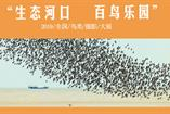 2019生态河口全国鸟类摄影大展