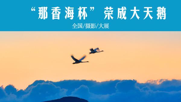 荣成大天鹅全国摄影大展