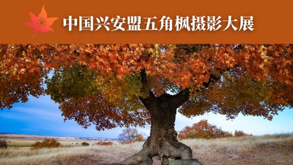 中国兴安盟五角枫摄影大展