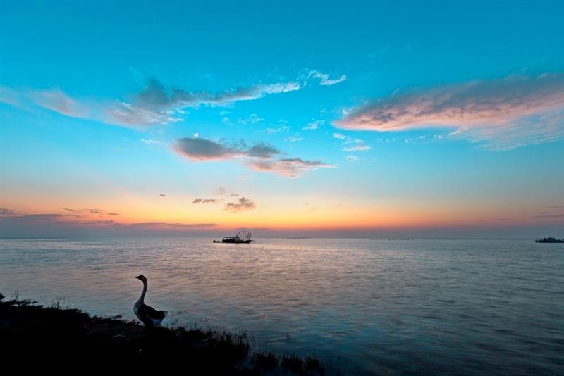 拍摄地点: 宣城南漪湖  拍摄时间: 2015-10-03  作品       金牛哥
