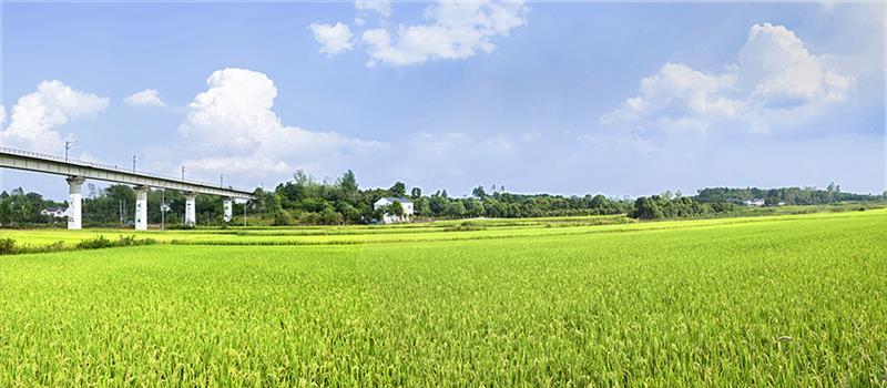 6拍于钟祥市九里回族乡杨桥村农村田野.