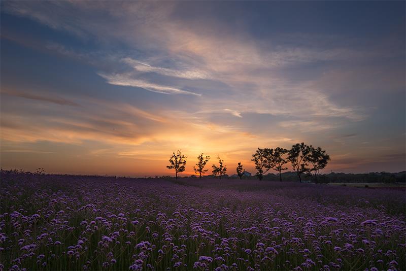 上一页 下一页 作品名称: 晨曦  作品描述: 摄于苏州镇湖西京湾