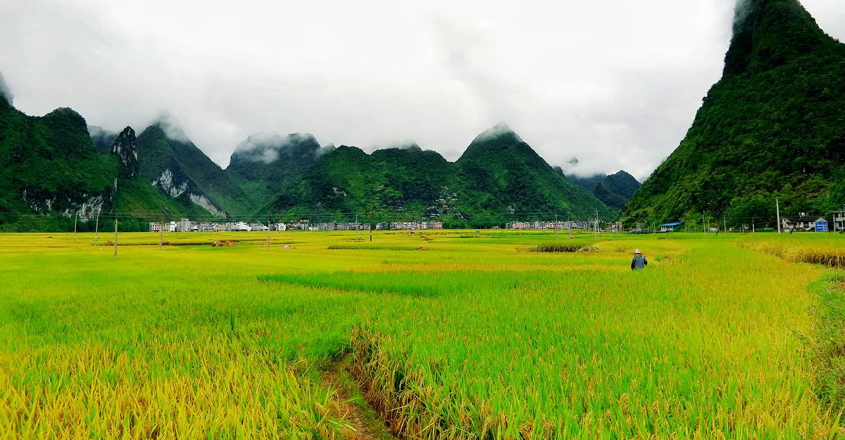 拍摄地点: 河池东兰县兰木乡  拍摄时间: 2015-07-23  作品