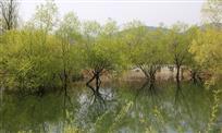 宿州五柳仙境(5)