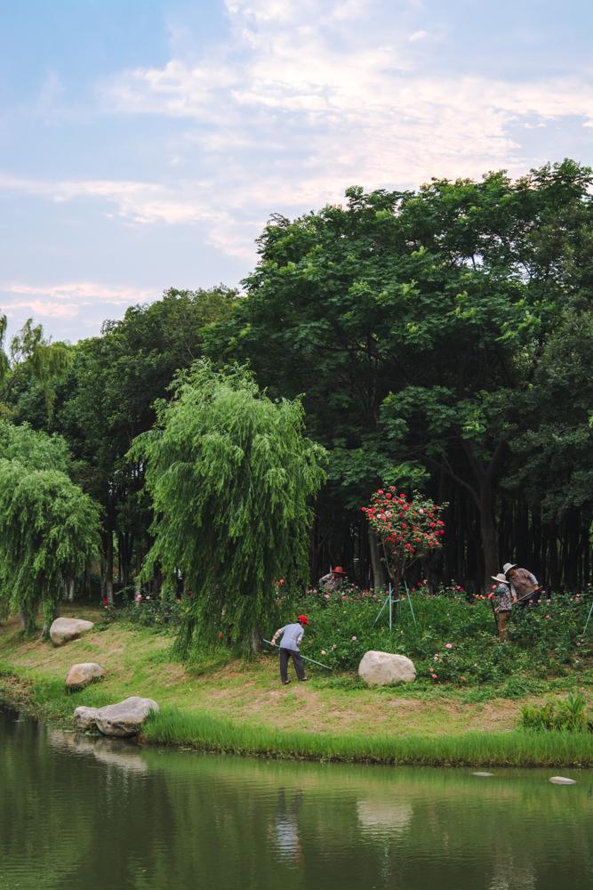 上一页 下一页 作品名称: 护花使者  作品描述: 月季园里的园丁们,他