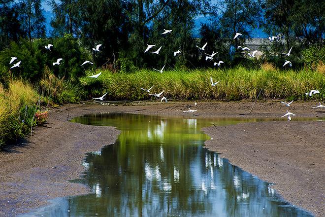 作品描述: 白鹭的美好家园,人们的宜居家园  拍摄地点: 玉环海山