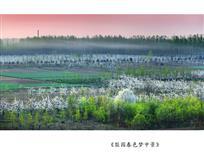 《梨园春色梦中景》