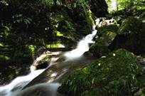溪绿水明常相伴