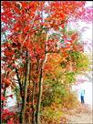 秋日的私语