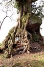 古树·岩石