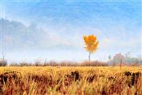 《那一抹秋》