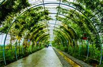 米果果生态园