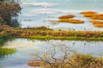 《湿地晚秋》