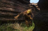 红石林的厄巴舞