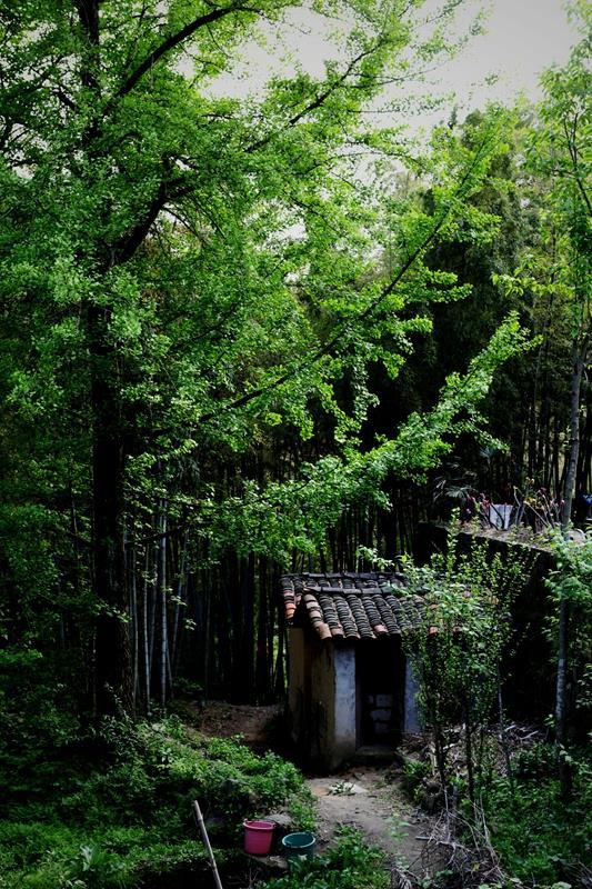 拍摄地点: 霍山铜锣寨风景区  拍摄时间: 2013-04-24  作品       7