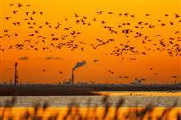 环保油城.和谐湿地