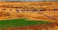 牛羊群牧图