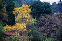 《多彩之秋》